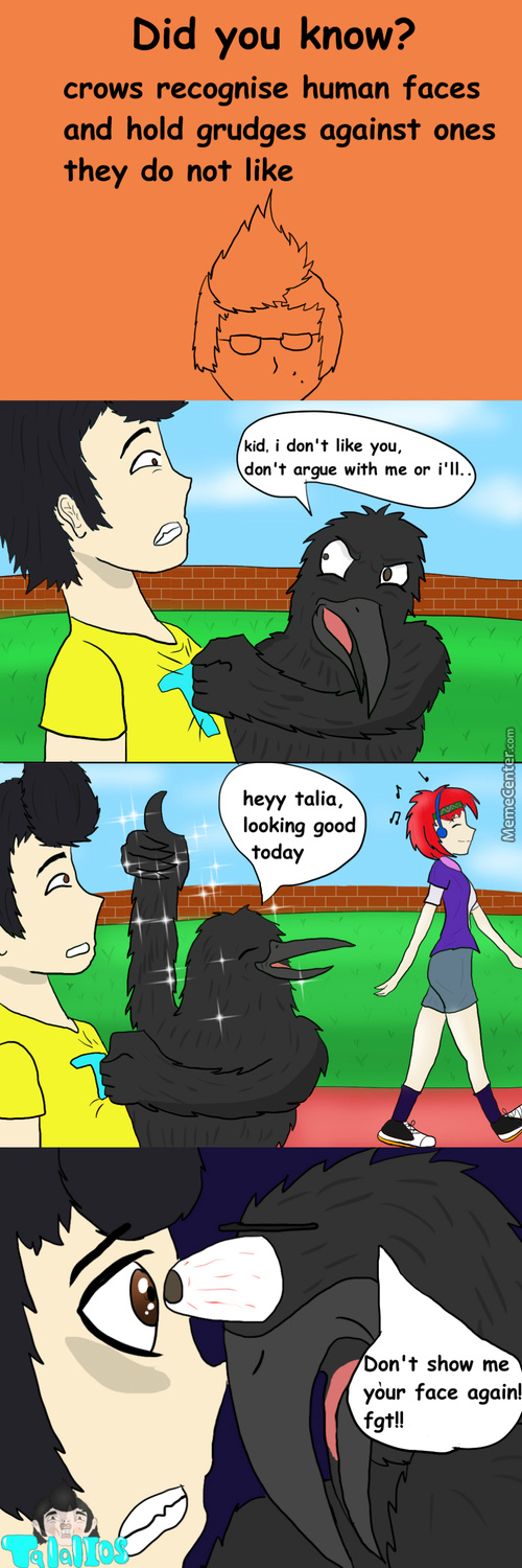 Don't Mess With  Crows,just Dont