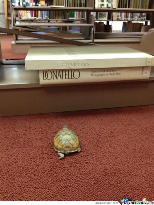 Dream Big,little Turtle.
