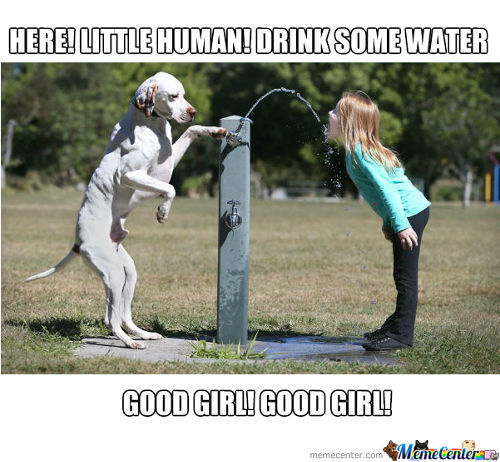 Drink Some Water My Little Pet