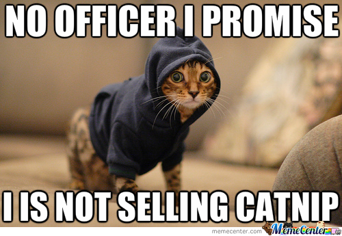 Drug Dealer Kitteh