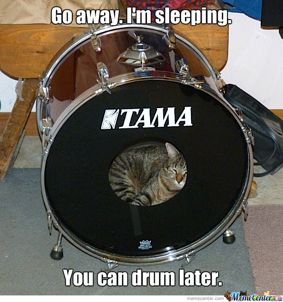 Drum Kitty