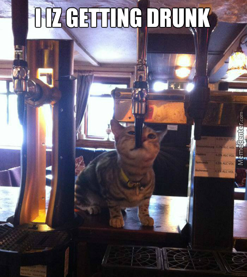 Drunk Kitty