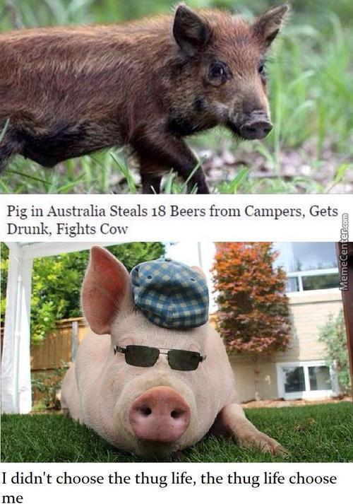Drunk Pig Become Cop To Fight Evil Cows, But Is Fired And Join Gangs