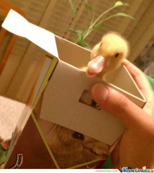 Duck In A Box