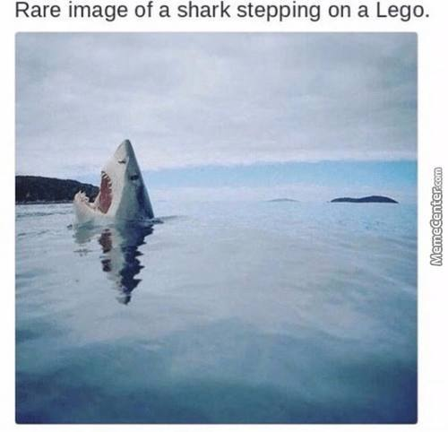 Each Year, Legos Causes More Human Deaths And Pain That Sharks