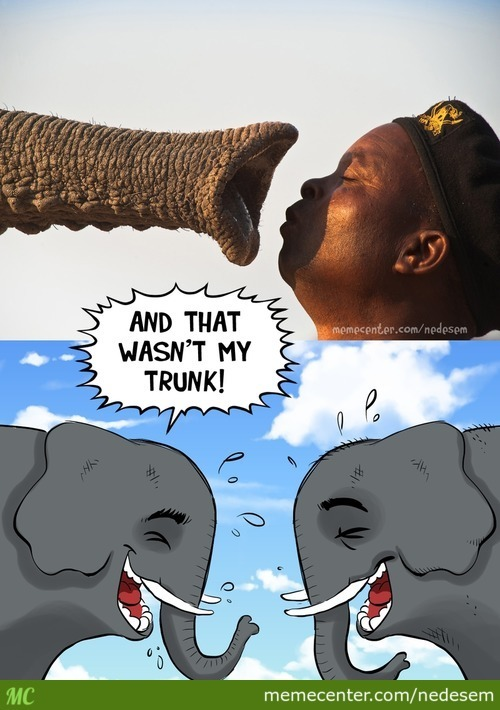 Elephant Inside Jokes