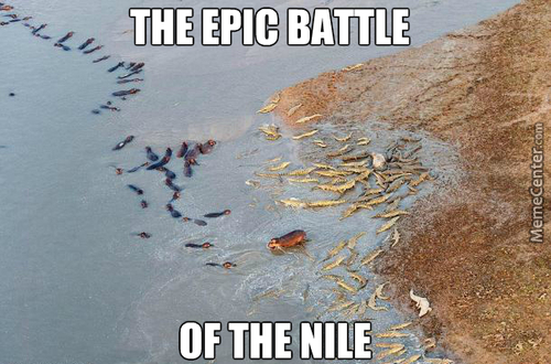 Epic Battle Between Hippos And Crocodiles