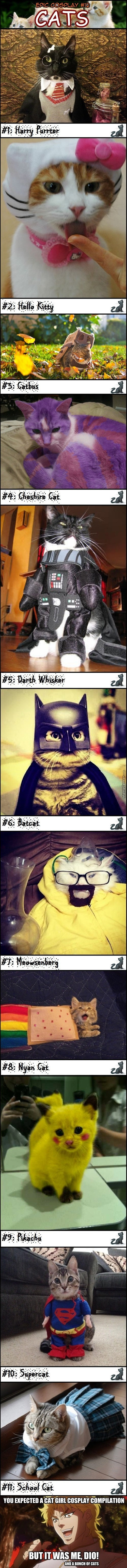 Epic Cosplay #12: Cats