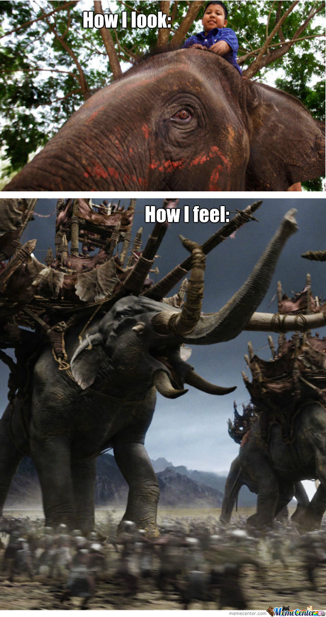Epic Elephant Is Epic