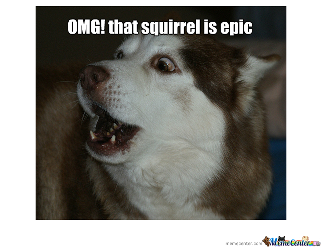Epic Squirrel Dog
