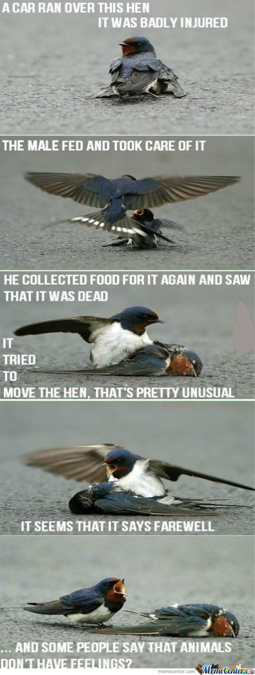 Even Birds Have Feelings!