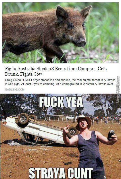 Even The Animals In Australia Know How To Party