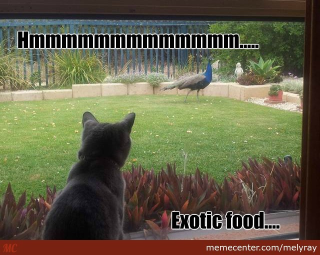 Exotic Cat Food