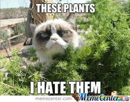 F**k These Plants