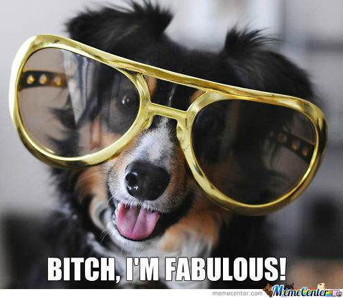 Fabulous Doggy