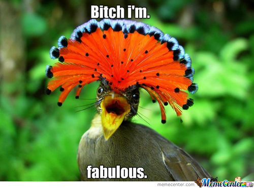 Fabulous Bird