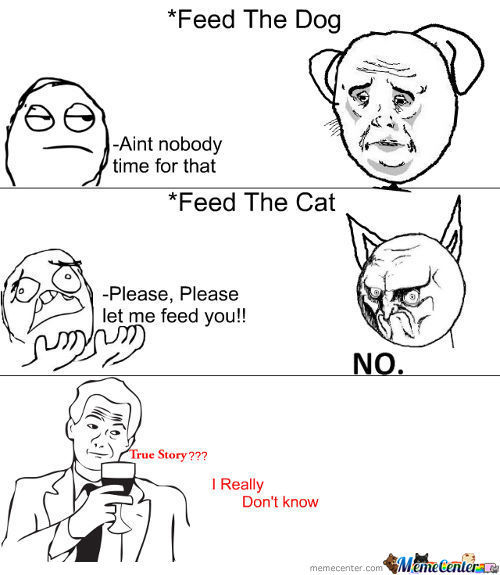 Feeding Dog/cat