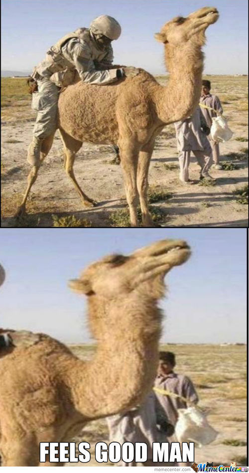 Feels Good Camel