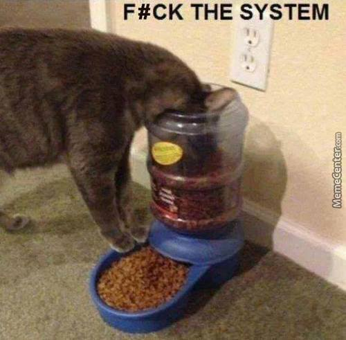 Fk The System