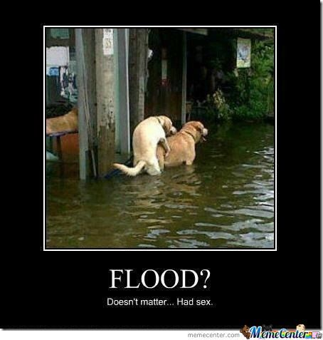 Flood ???what Flood