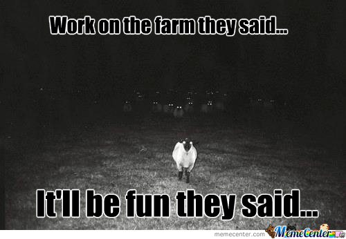 Freaky Sheep