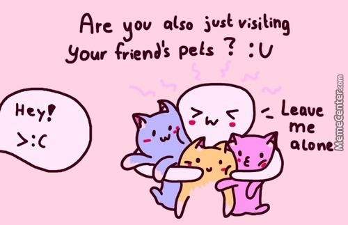 Friends With Friendly Friend's Friend Cats