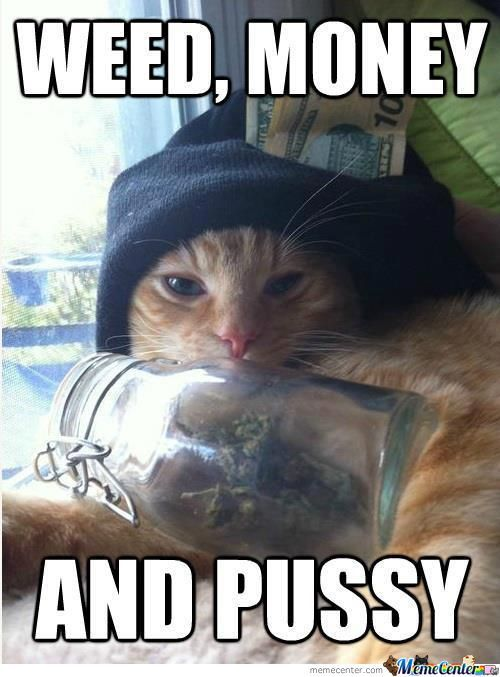Gangsta Cat