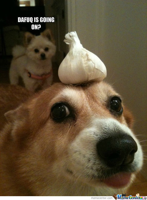 Garlic Dog