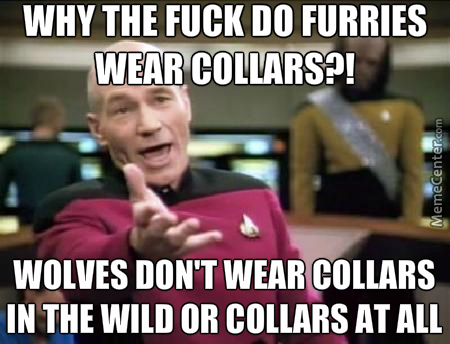 Geez Furries For People Thinking They Are Animals, They Don't Know What Animals Do