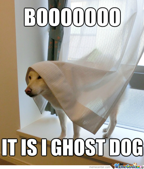 Ghost Dog