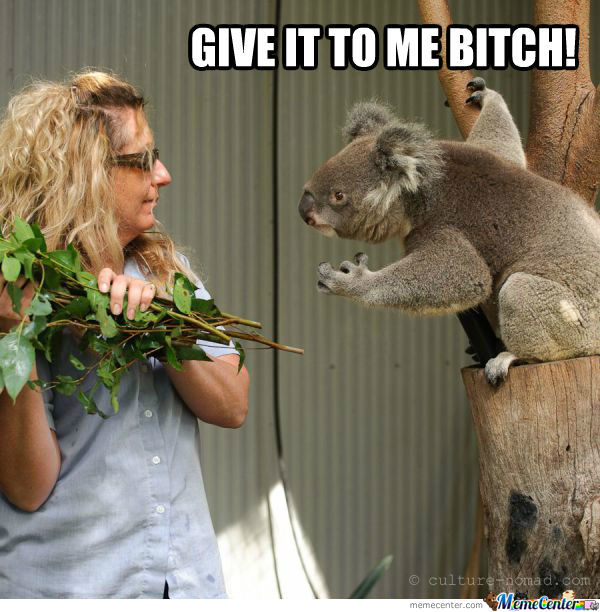 Give It To Me B*tch!