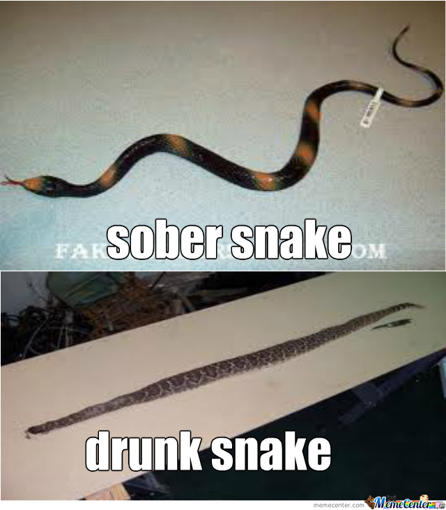 Go Home Snake You're Drunk