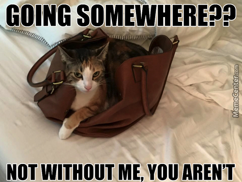 Going Somewhere Cat