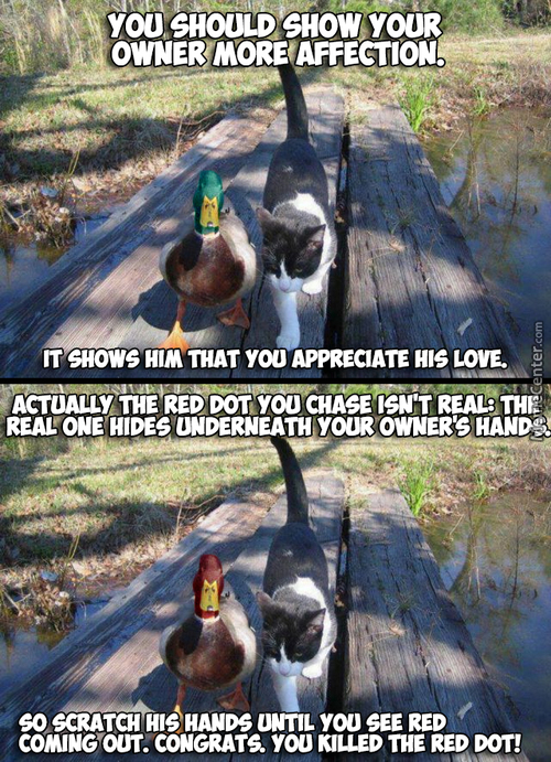 Good/bad Advice Mallard.