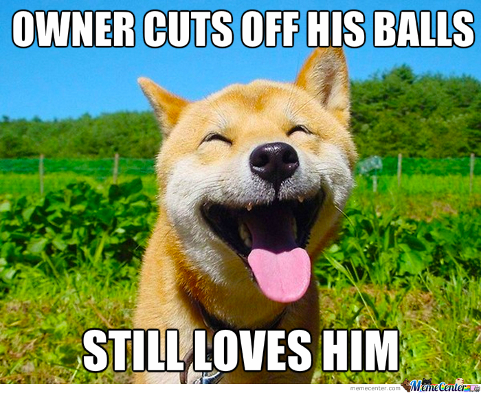 Good Guy Dog