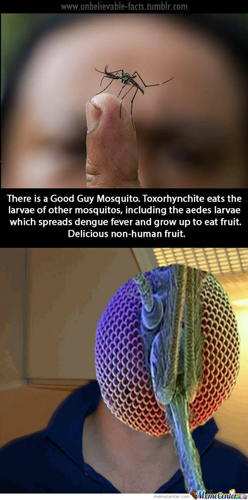 Good Guy Mosquito