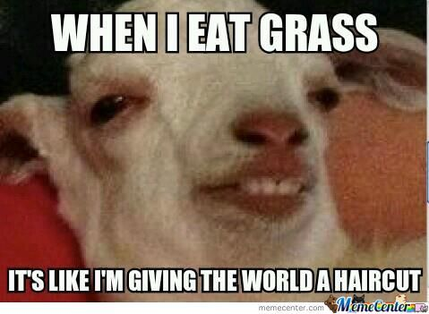 Groggy Goat (New Meme)