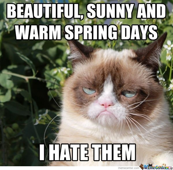 Grumpy Cat And The Spring