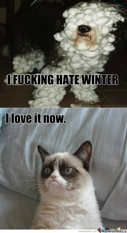 Grumpy Cat Approves
