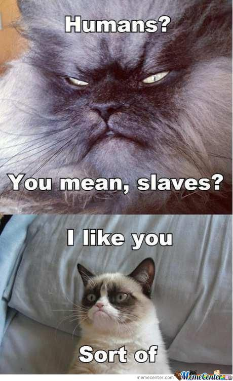 Grumpy Cat Finds A Friend...sort Of