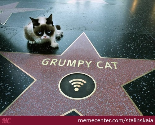 Grumpy Cat Walk Of Fame