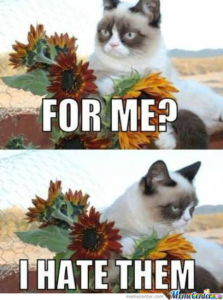Grumpy Cat Hates Flowers