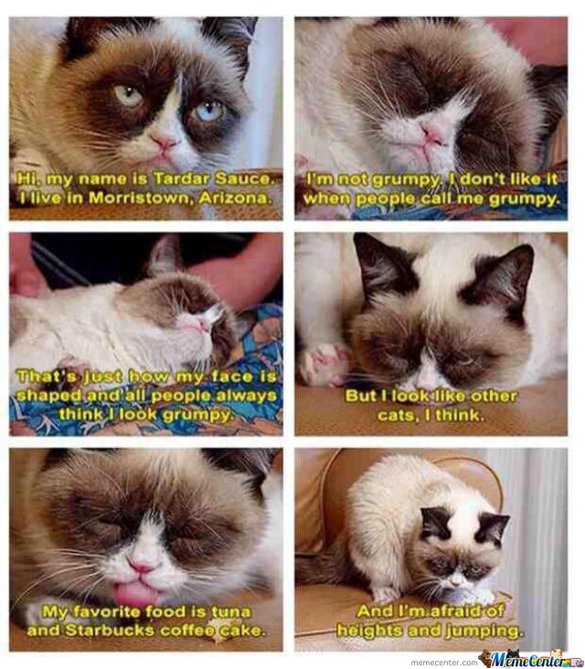 Grumpy Cat Is Misunderstood