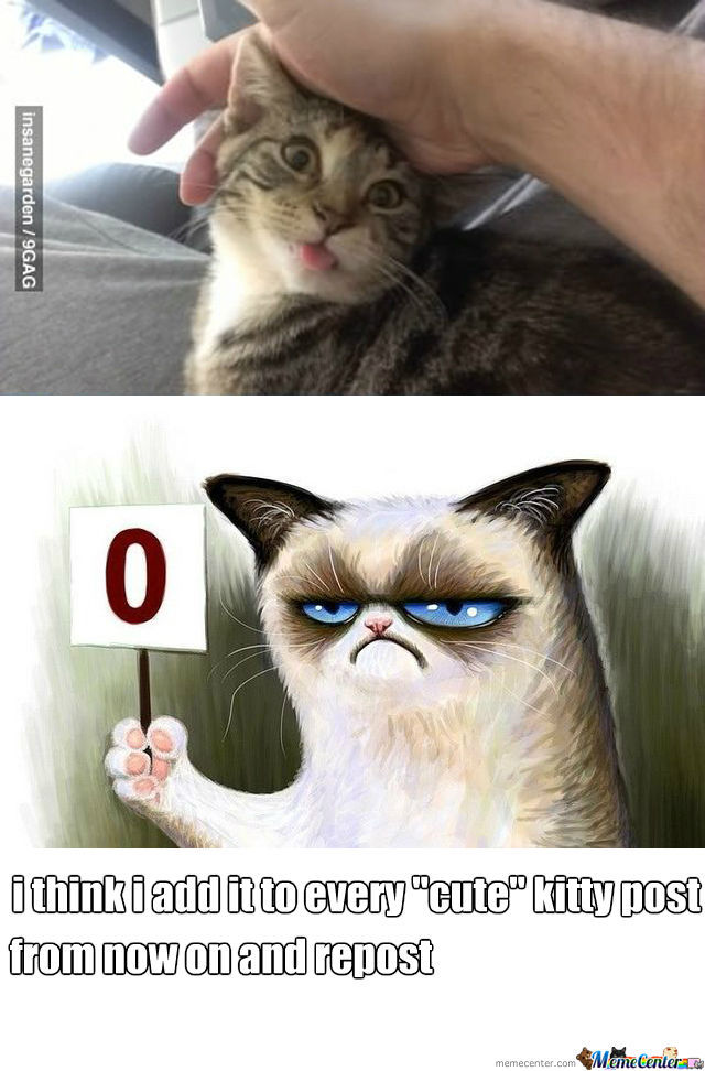 Grumpy Cat Is Not Amused by recyclebin - Meme Center