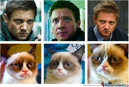 Grumpy Cat Is Not Happy