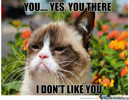Grumpy Cat Is Not Pleased