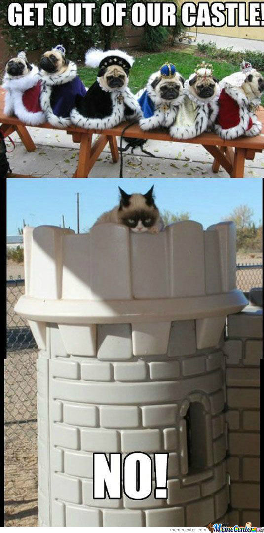 Grumpy Cat Occupys Castle
