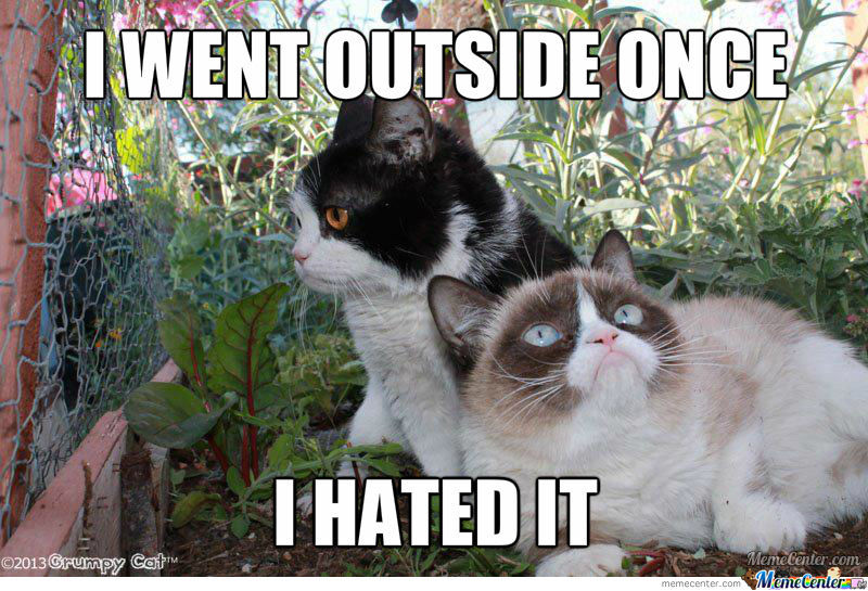 Grumpy Cat Outside