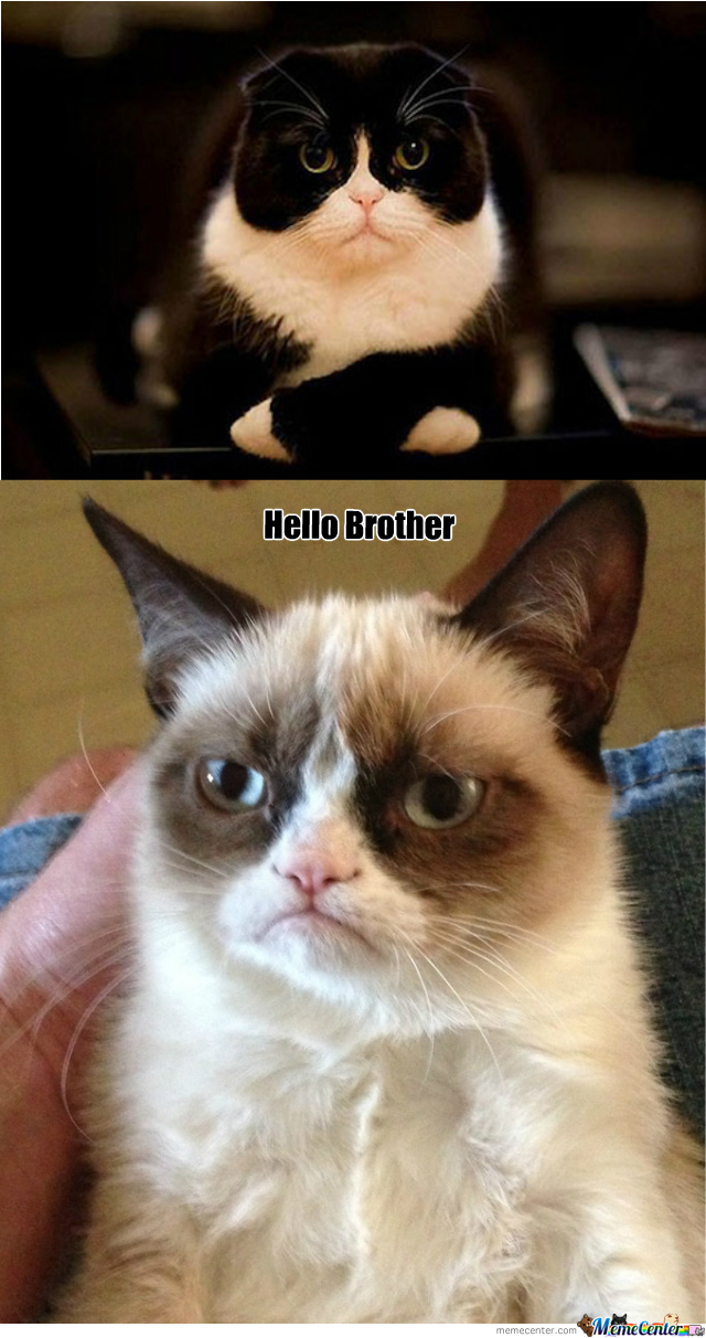 Grumpy Cats Brother