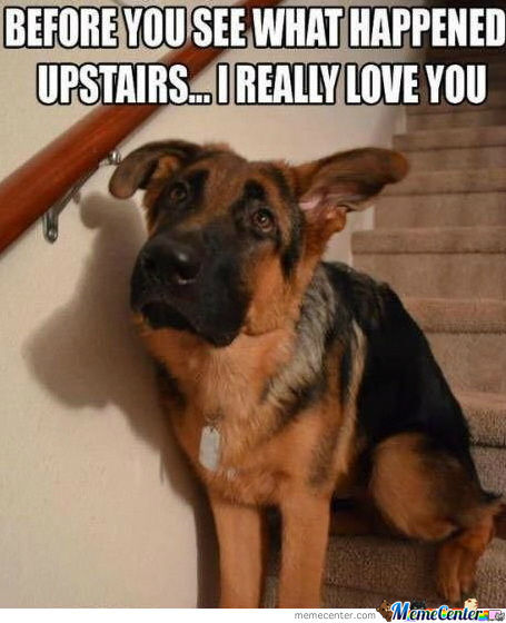 Guilty Dog Loves You...